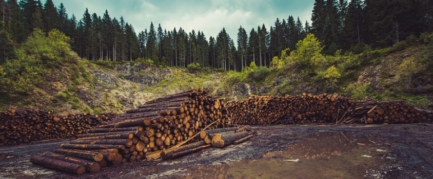 CatchMark Timber Trust Pays 4.2% Current Yield (CTT)
