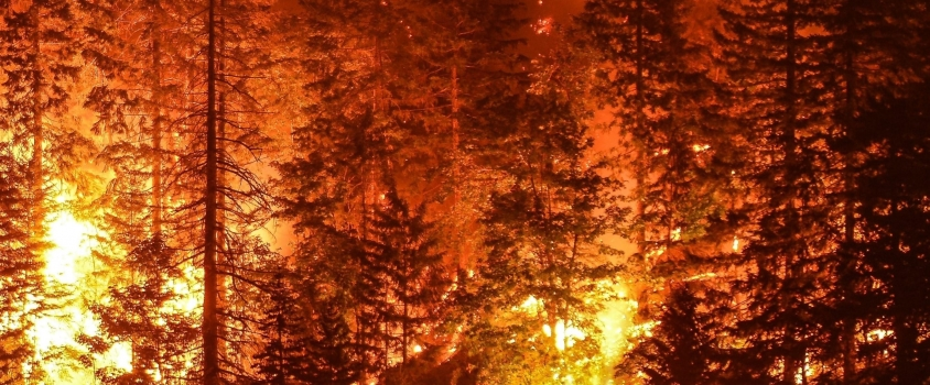 National Guard Saves Lives From Wildfires and Signals Dividend Investors